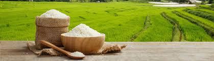درس انگلیسی 13/Rice/برنج