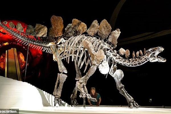 قدیمی ترین گونه یک دایناسور کشف شد