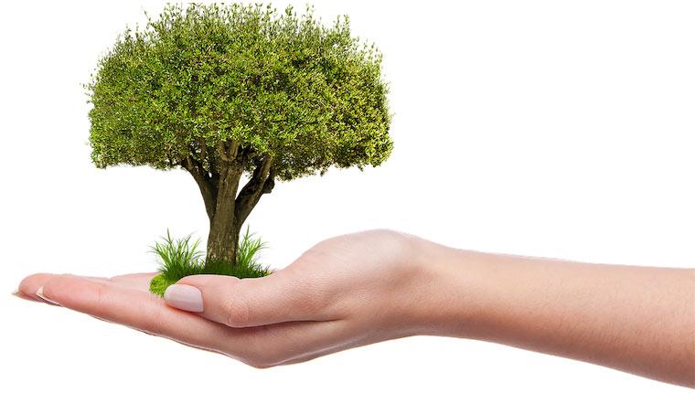 چرا باید درخت بکاریم ؟