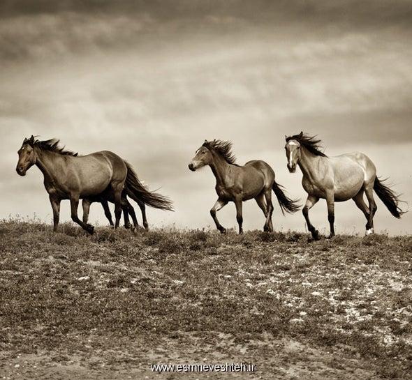 جدیدترین مقاله در مورد زندگی اسب 2020  - عکس کده