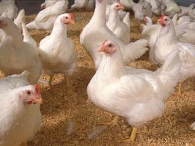 پیشگیری از آنفلوآنزای مرغی ، آنفلوآنزا