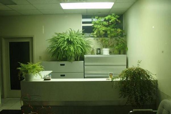 اخبار پزشکی ,خبرهای پزشکی ,گیاهان آپارتمانی