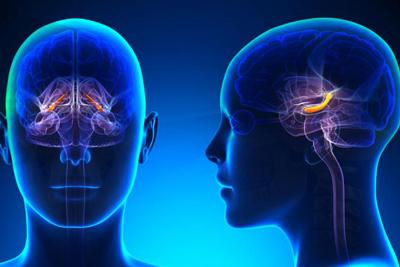 بیماری کوچک شدن مغز، جلوگیری از کوچک شدن مغز