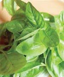 سلامت پوست,داروهای گیاهی مناسب پوست,جوش های زیر پوستی,درمان جوش های زیر پوستی