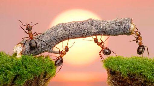 آیا میدانید که....مورچه،فیل