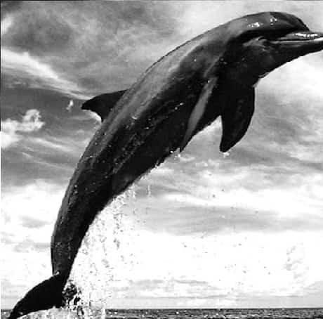 دانلود ریمیکس دلفین سیاه Black Dolphin Remix