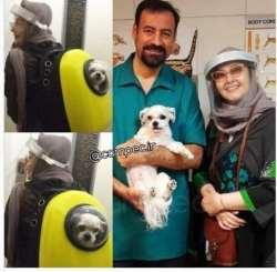 کتايون رياحي بازيگر سينما همراه سگش