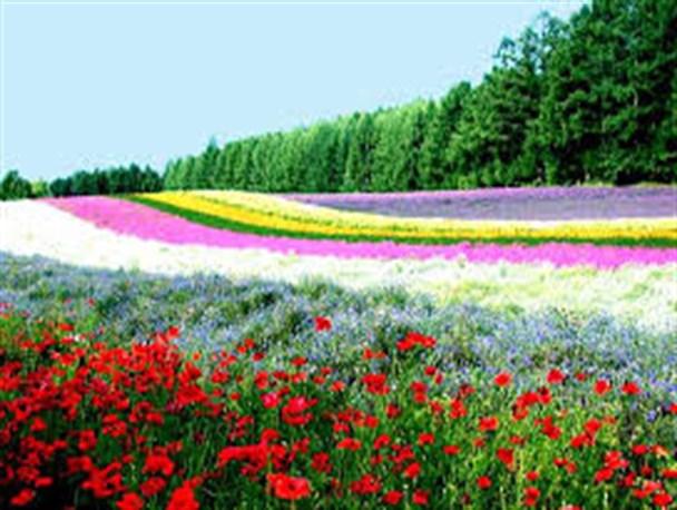 داستان تاجری که گل را پرورش  داد حتمن دلیلی داشت