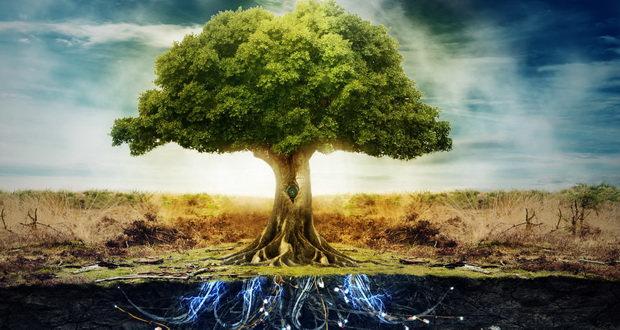 داستان آموزنده « درخت بی مرگی » مثنوی معنوی