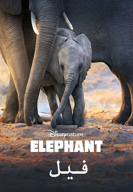 مستند فیل دوبله فارسی Elephant 2020