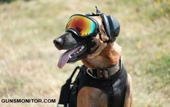 ساخت عينک هاي پيشرفته براي سگ ها در ارتش آمريکا