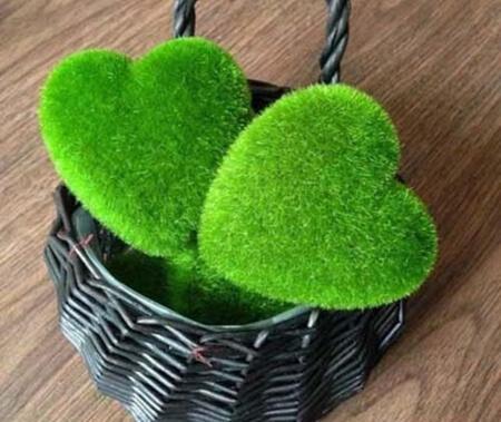 کاشت سبزه به شکل قلب