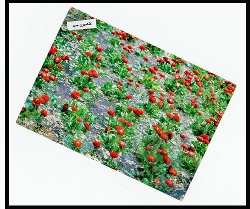 سمند (5).jpg (500×418)