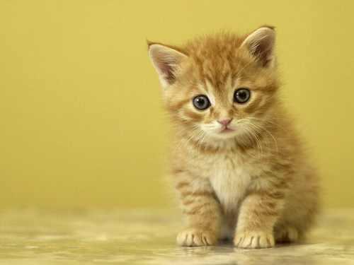 تصاویر گربه 3