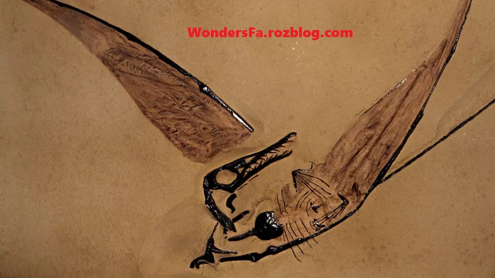 فسیل اژدهای پرنده