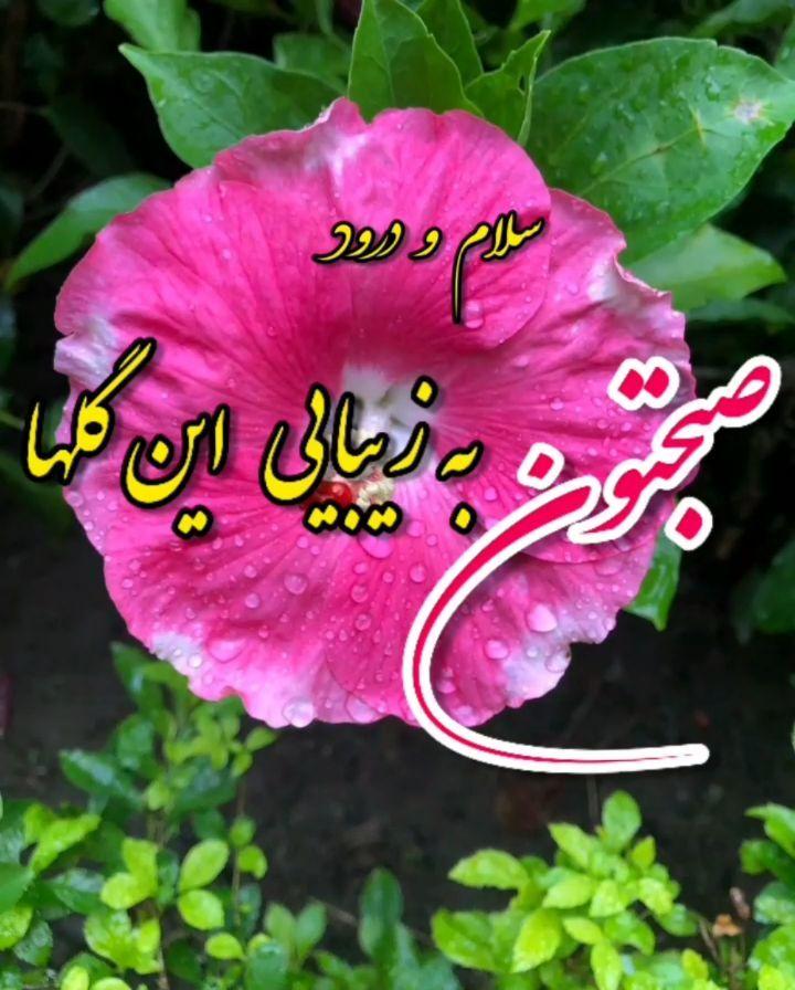 استیکر واتساپ فارسی سلام صبح بخیر