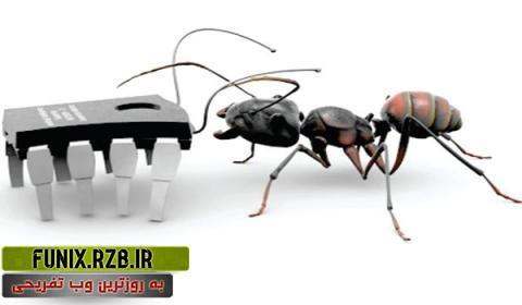مورچه ها ارتش طبیعت اند! + فیلم