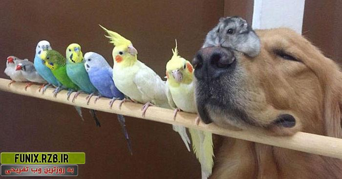 همزیستی جالب 1 سگ با 8 پرنده و 1 موش بانمک