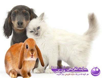 تست هوش: وزن سگ، گربه و خرگوش را بیابید.