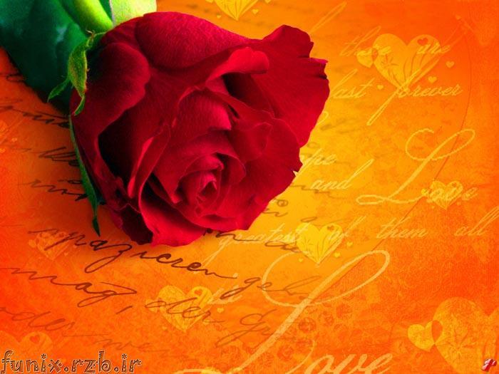 عكس های رمانتيك از گل رز