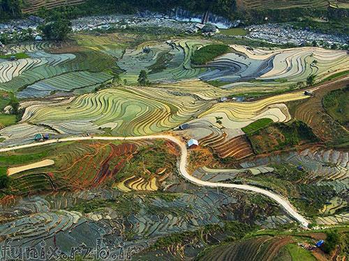 عکس: نقاشی زیبای مزارع برنج ویتنام