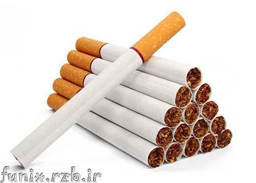 سیگار کشیدن یک مار تایوانی