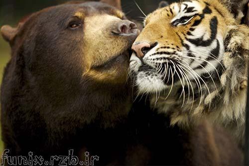 دوستیهای شگفت انگیز حیوانات