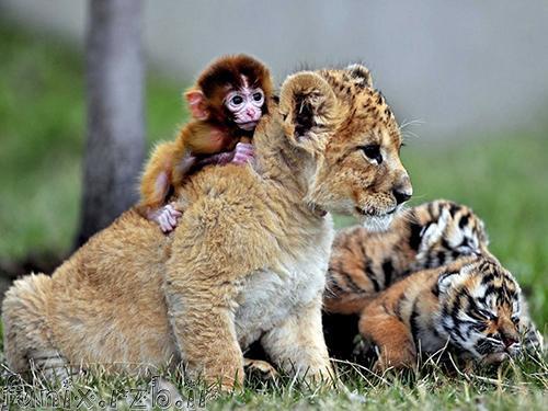 دوستیهای شگفت انگیز حیوانات (سری 2)