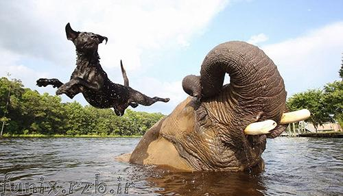 دوستیهای شگفت انگیز حیوانات (سری 3)