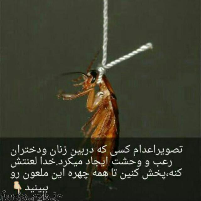 تصوير اعدام عامل رعب و وحشت بين زنان و دختران