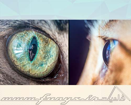 تصاویر زیبا و دیدنی از چشم های گربه ها