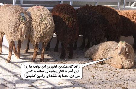 عکس های طنز و خنده دار عید قربان