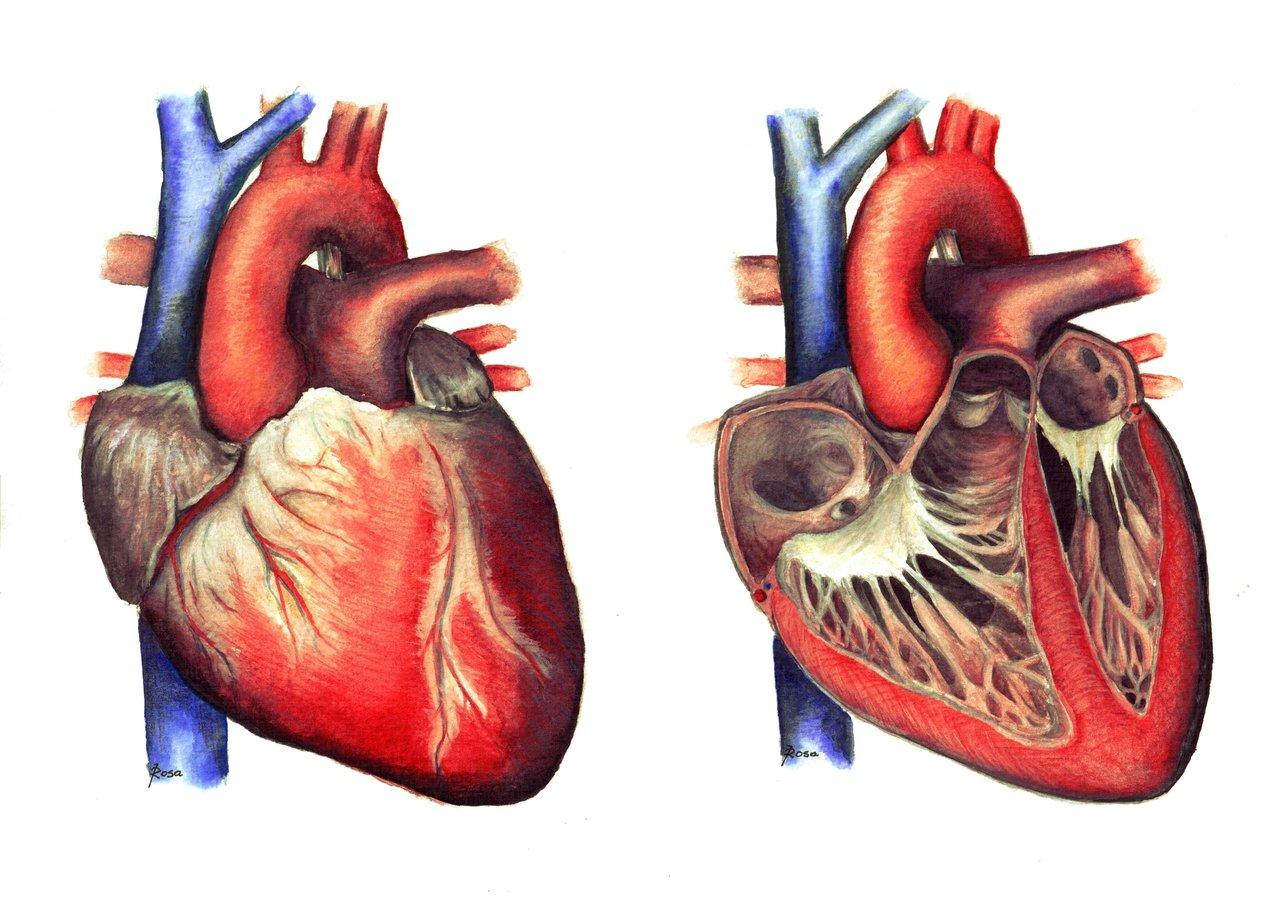 دانلود فیلم تشریح قلب ( آناتومی عملی - جلسه دوم )